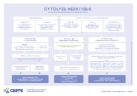 Cytolyse hépatique orientation diagnostique et conduite à tenir